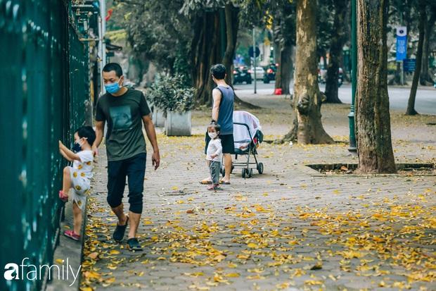 Cuối tháng 4, con phố lãng mạn nhất Hà Nội đón mùa sấu thay lá vàng rực khắp con đường - Ảnh 5.