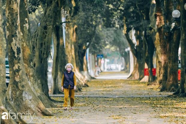 Cuối tháng 4, con phố lãng mạn nhất Hà Nội đón mùa sấu thay lá vàng rực khắp con đường - Ảnh 6.