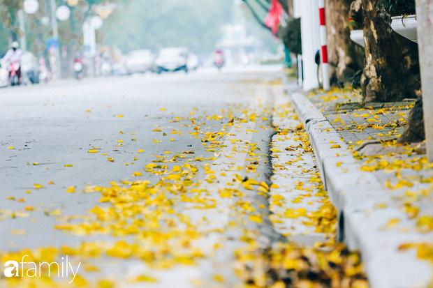 Cuối tháng 4, con phố lãng mạn nhất Hà Nội đón mùa sấu thay lá vàng rực khắp con đường - Ảnh 10.