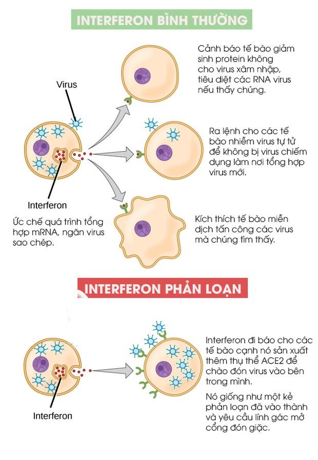 Các nhà khoa học tìm thấy một protein phản loạn trong cơ thể, kẻ mở cổng thành đón giặc SARS-CoV-2 vào trong tế bào - Ảnh 3.