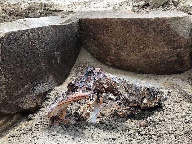 Xác ướp người đẹp ngủ được khai quật sau 2.000 năm: Tình trạng bảo quản tốt, nhiều khả năng là quý tộc thời cổ đại - Ảnh 4.