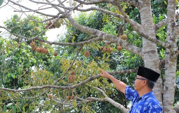 Kỳ lạ: Sầu riêng không gai hiếm hoi được tìm thấy cách đây 13 năm