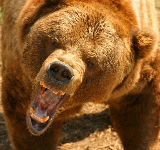 Điểm danh những loài vật có cú cắn uy lực nhất hành tinh, sư tử còn phải ngậm ngùi đứng ngoài Top 10 - Ảnh 8.