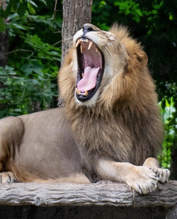 Điểm danh những loài vật có cú cắn uy lực nhất hành tinh, sư tử còn phải ngậm ngùi đứng ngoài Top 10 - Ảnh 13.