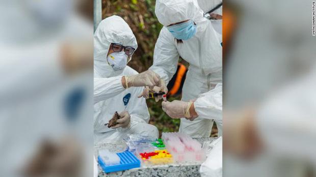 Chuyện về biệt đội săn dơi: Những người liều mạng với virus chết chóc nhất bậc nhất, phát hiện tổ tiên của Covid-19 từ nhiều năm trước - Ảnh 7.