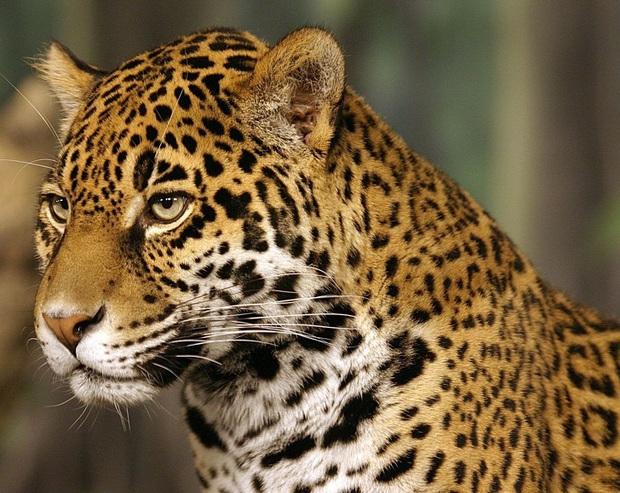 160.000 người khắp thế giới rủ nhau bỏ phiếu xem loài nào đẹp trai nhất thế giới động vật - Ảnh 11.