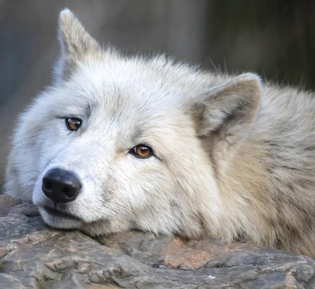 160.000 người khắp thế giới rủ nhau bỏ phiếu xem loài nào đẹp trai nhất thế giới động vật - Ảnh 12.