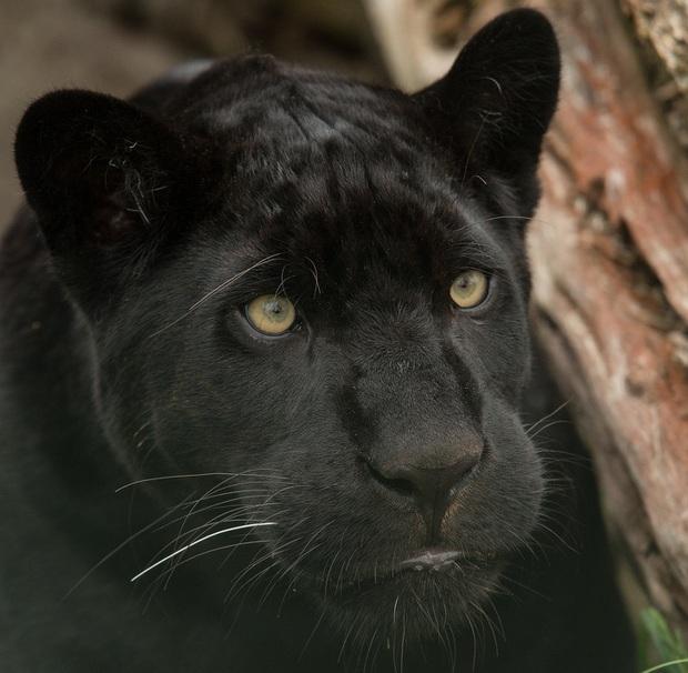160.000 người khắp thế giới rủ nhau bỏ phiếu xem loài nào đẹp trai nhất thế giới động vật - Ảnh 14.