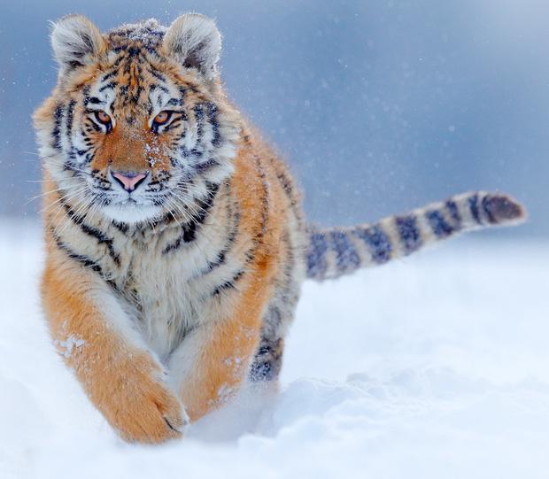 160.000 người khắp thế giới rủ nhau bỏ phiếu xem loài nào đẹp trai nhất thế giới động vật - Ảnh 15.