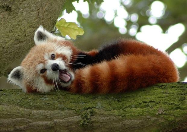 160.000 người khắp thế giới rủ nhau bỏ phiếu xem loài nào đẹp trai nhất thế giới động vật - Ảnh 9.