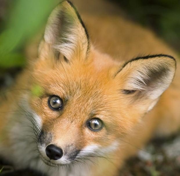160.000 người khắp thế giới rủ nhau bỏ phiếu xem loài nào đẹp trai nhất thế giới động vật - Ảnh 13.