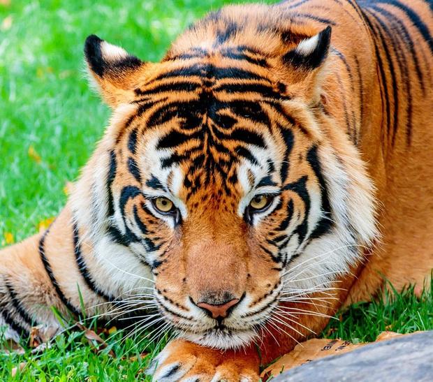 160.000 người khắp thế giới rủ nhau bỏ phiếu xem loài nào đẹp trai nhất thế giới động vật - Ảnh 1.
