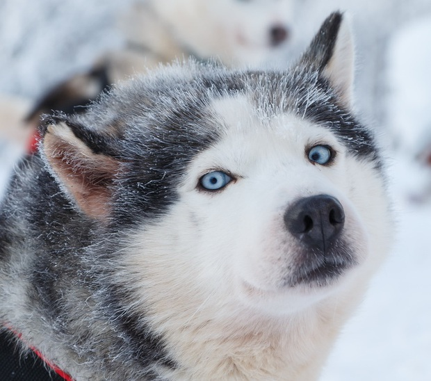 160.000 người khắp thế giới rủ nhau bỏ phiếu xem loài nào đẹp trai nhất thế giới động vật - Ảnh 6.