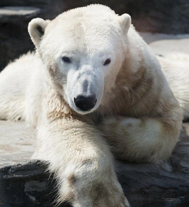 160.000 người khắp thế giới rủ nhau bỏ phiếu xem loài nào đẹp trai nhất thế giới động vật - Ảnh 5.