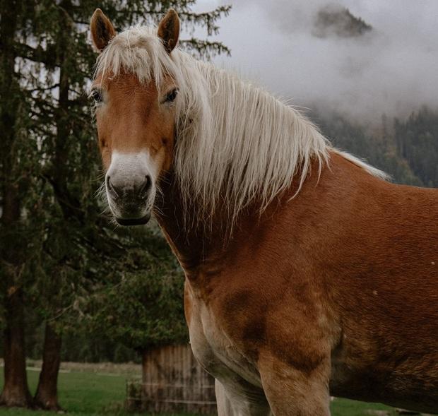 160.000 người khắp thế giới rủ nhau bỏ phiếu xem loài nào đẹp trai nhất thế giới động vật - Ảnh 4.