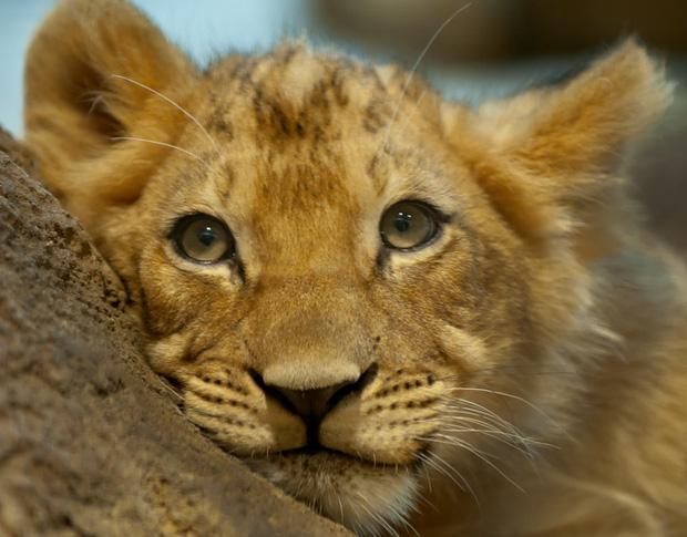 160.000 người khắp thế giới rủ nhau bỏ phiếu xem loài nào đẹp trai nhất thế giới động vật - Ảnh 3.