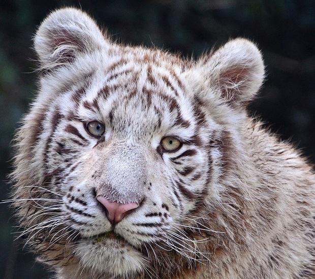 160.000 người khắp thế giới rủ nhau bỏ phiếu xem loài nào đẹp trai nhất thế giới động vật - Ảnh 16.