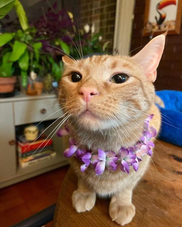 Gặp Carrot, chú mèo nổi tiếng khắp mạng xã hội với pha thò tay ăn vụng thần sầu - Ảnh 5.