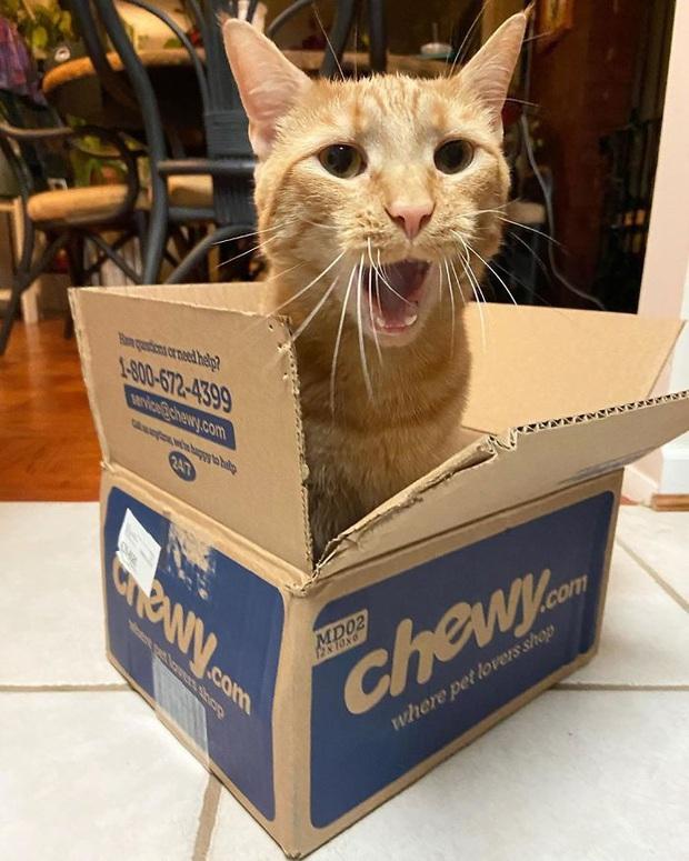 Gặp Carrot, chú mèo nổi tiếng khắp mạng xã hội với pha thò tay ăn vụng thần sầu - Ảnh 6.