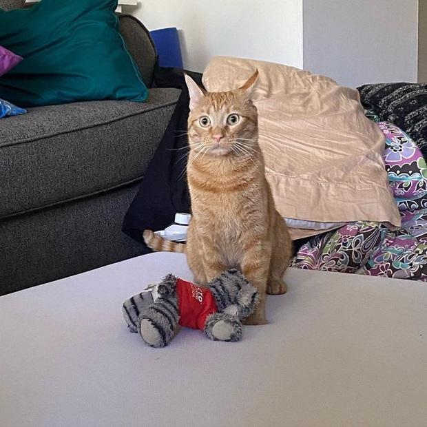 Gặp Carrot, chú mèo nổi tiếng khắp mạng xã hội với pha thò tay ăn vụng thần sầu - Ảnh 9.