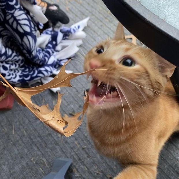 Gặp Carrot, chú mèo nổi tiếng khắp mạng xã hội với pha thò tay ăn vụng thần sầu - Ảnh 7.