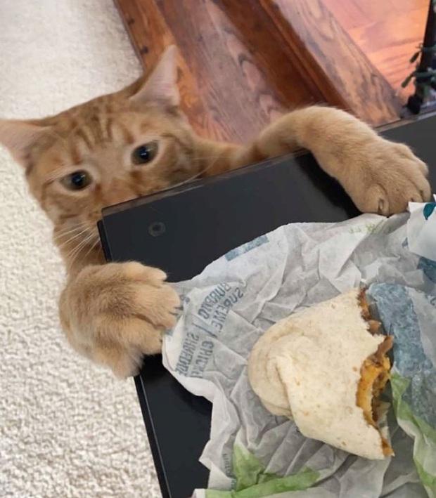 Gặp Carrot, chú mèo nổi tiếng khắp mạng xã hội với pha thò tay ăn vụng thần sầu - Ảnh 10.