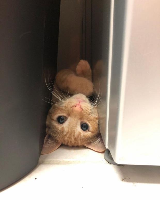 Gặp Carrot, chú mèo nổi tiếng khắp mạng xã hội với pha thò tay ăn vụng thần sầu - Ảnh 8.
