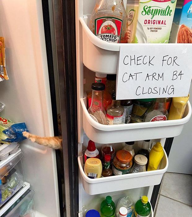 Gặp Carrot, chú mèo nổi tiếng khắp mạng xã hội với pha thò tay ăn vụng thần sầu - Ảnh 1.