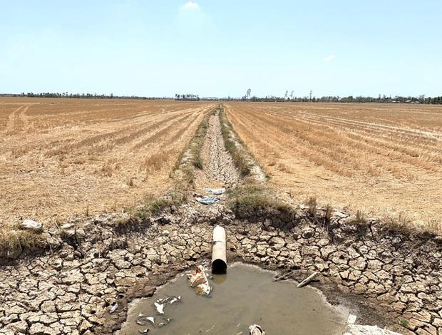 Tường trình vùng hạn mặn: Người khổ sở vì khô khát, người thản nhiên có sao đâu - Ảnh 3.