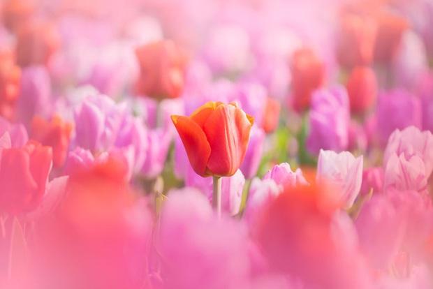 Vườn hoa đẹp nhất thế giới đóng cửa sau 71 năm, nhiếp ảnh gia tò mò muốn vào bên trong thì choáng ngợp với cảnh tượng trước mắt Photo-10-15882497654511713112419