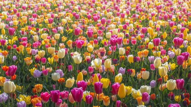 Vườn hoa đẹp nhất thế giới đóng cửa sau 71 năm, nhiếp ảnh gia tò mò muốn vào bên trong thì choáng ngợp với cảnh tượng trước mắt - Ảnh 12.
