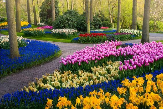 Vườn hoa đẹp nhất thế giới đóng cửa sau 71 năm, nhiếp ảnh gia tò mò muốn vào bên trong thì choáng ngợp với cảnh tượng trước mắt Photo-13-15882497654561505576459