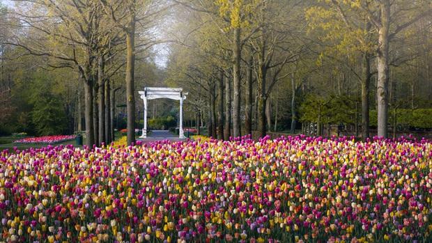Vườn hoa đẹp nhất thế giới đóng cửa sau 71 năm, nhiếp ảnh gia tò mò muốn vào bên trong thì choáng ngợp với cảnh tượng trước mắt Photo-14-1588249765458279208738