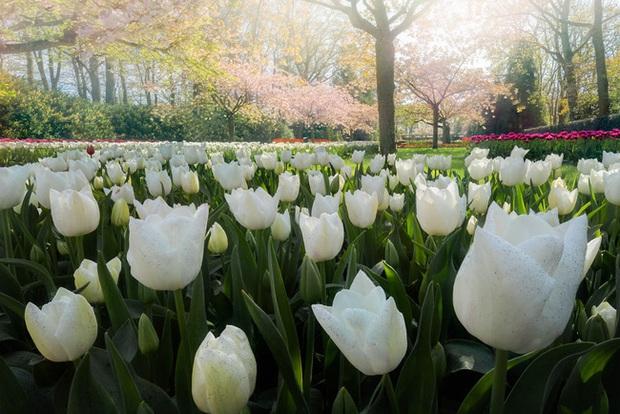 Vườn hoa đẹp nhất thế giới đóng cửa sau 71 năm, nhiếp ảnh gia tò mò muốn vào bên trong thì choáng ngợp với cảnh tượng trước mắt - Ảnh 15.