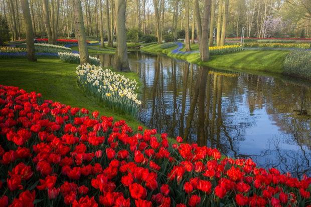 Vườn hoa đẹp nhất thế giới đóng cửa sau 71 năm, nhiếp ảnh gia tò mò muốn vào bên trong thì choáng ngợp với cảnh tượng trước mắt - Ảnh 17.