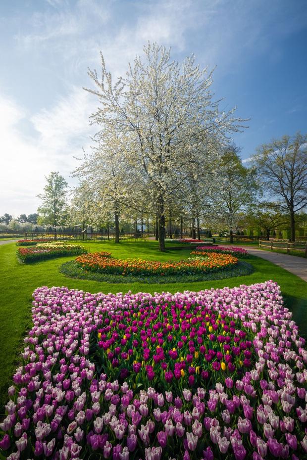 Vườn hoa đẹp nhất thế giới đóng cửa sau 71 năm, nhiếp ảnh gia tò mò muốn vào bên trong thì choáng ngợp với cảnh tượng trước mắt Photo-18-15882497654652147160528