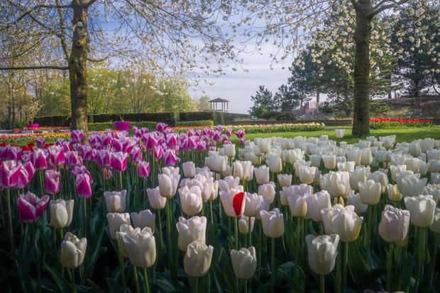 Vườn hoa đẹp nhất thế giới đóng cửa sau 71 năm, nhiếp ảnh gia tò mò muốn vào bên trong thì choáng ngợp với cảnh tượng trước mắt - Ảnh 19.