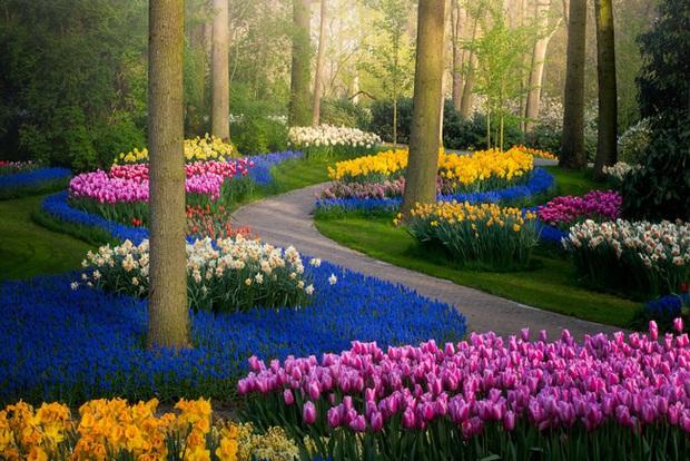 Vườn hoa đẹp nhất thế giới đóng cửa sau 71 năm, nhiếp ảnh gia tò mò muốn vào bên trong thì choáng ngợp với cảnh tượng trước mắt - Ảnh 2.