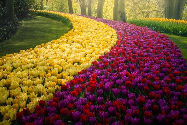 Vườn hoa đẹp nhất thế giới đóng cửa sau 71 năm, nhiếp ảnh gia tò mò muốn vào bên trong thì choáng ngợp với cảnh tượng trước mắt Photo-21-1588249765470863092002