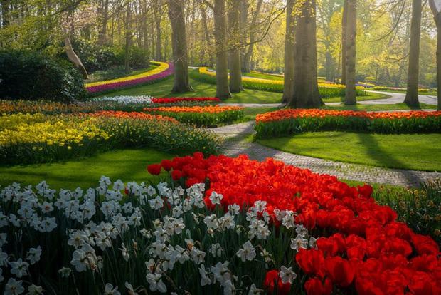 Vườn hoa đẹp nhất thế giới đóng cửa sau 71 năm, nhiếp ảnh gia tò mò muốn vào bên trong thì choáng ngợp với cảnh tượng trước mắt - Ảnh 22.