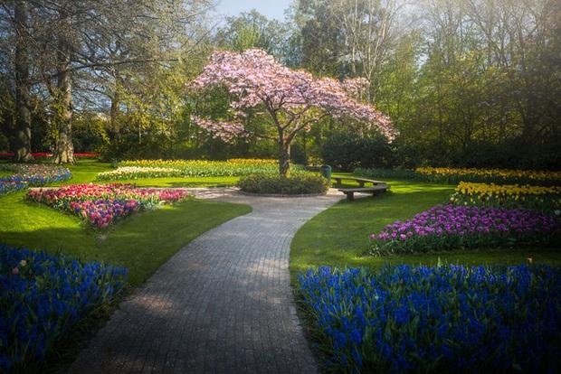 Vườn hoa đẹp nhất thế giới đóng cửa sau 71 năm, nhiếp ảnh gia tò mò muốn vào bên trong thì choáng ngợp với cảnh tượng trước mắt Photo-23-15882497654741455178971