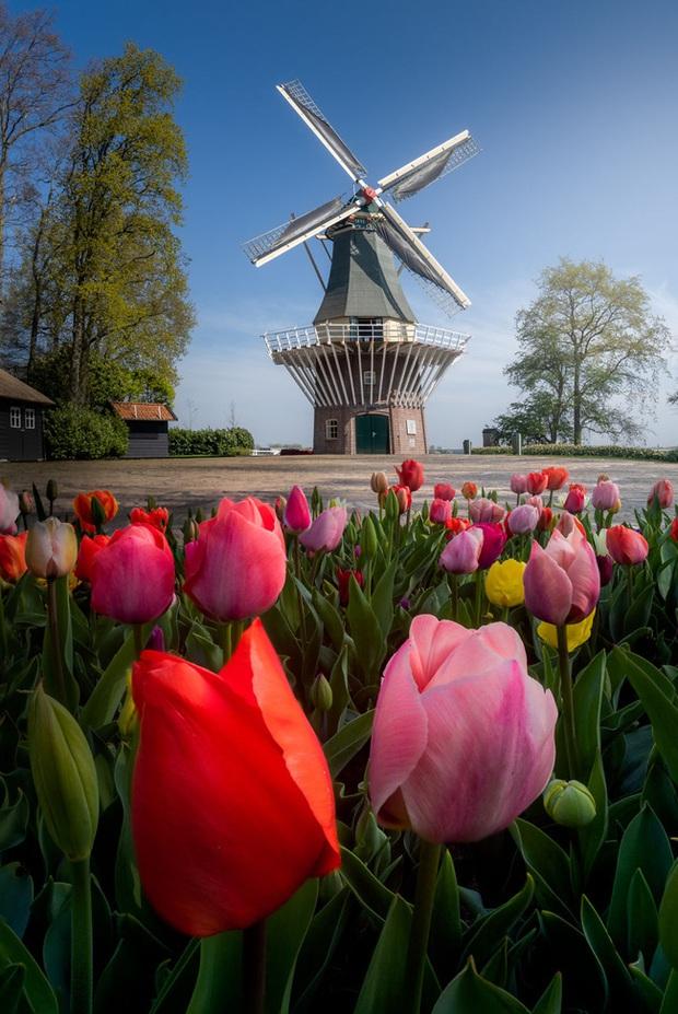Vườn hoa đẹp nhất thế giới đóng cửa sau 71 năm, nhiếp ảnh gia tò mò muốn vào bên trong thì choáng ngợp với cảnh tượng trước mắt Photo-3-1588249765438545619521