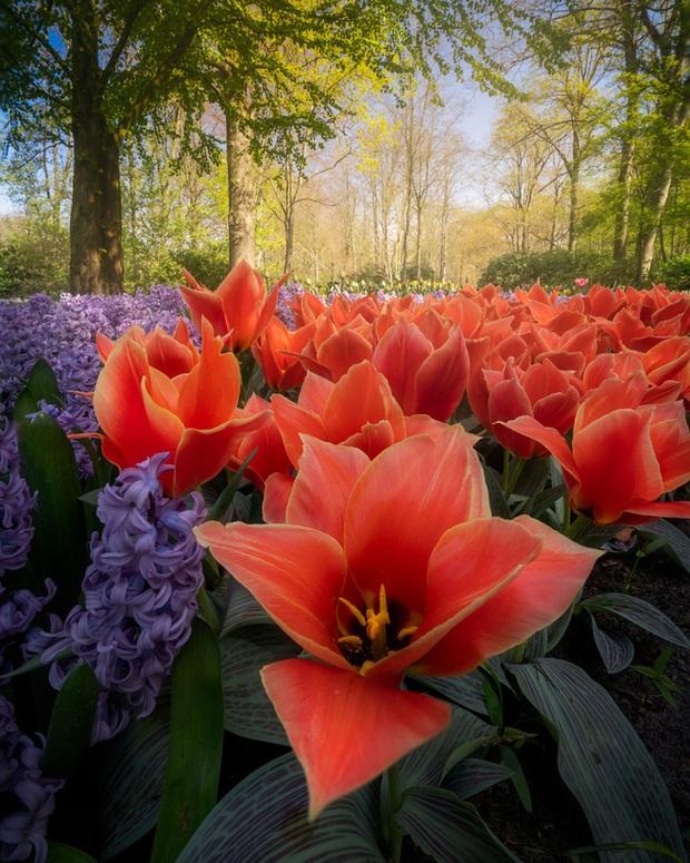 Vườn hoa đẹp nhất thế giới đóng cửa sau 71 năm, nhiếp ảnh gia tò mò muốn vào bên trong thì choáng ngợp với cảnh tượng trước mắt Photo-4-15882497654402061478984