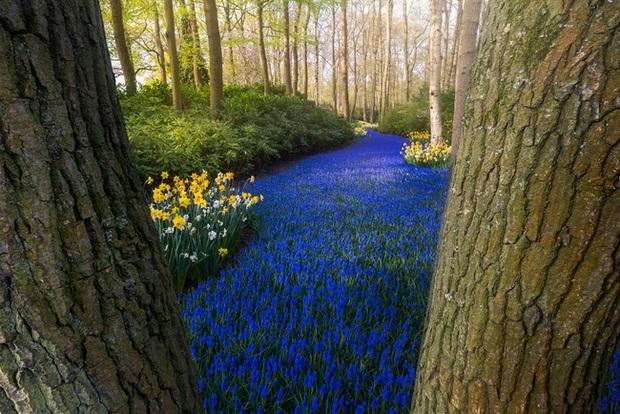 Vườn hoa đẹp nhất thế giới đóng cửa sau 71 năm, nhiếp ảnh gia tò mò muốn vào bên trong thì choáng ngợp với cảnh tượng trước mắt - Ảnh 5.