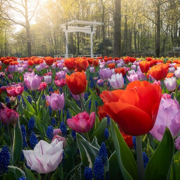 Vườn hoa đẹp nhất thế giới đóng cửa sau 71 năm, nhiếp ảnh gia tò mò muốn vào bên trong thì choáng ngợp với cảnh tượng trước mắt - Ảnh 6.