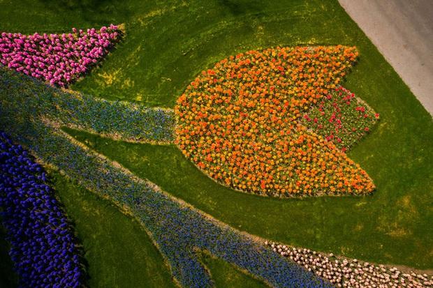 Vườn hoa đẹp nhất thế giới đóng cửa sau 71 năm, nhiếp ảnh gia tò mò muốn vào bên trong thì choáng ngợp với cảnh tượng trước mắt - Ảnh 7.