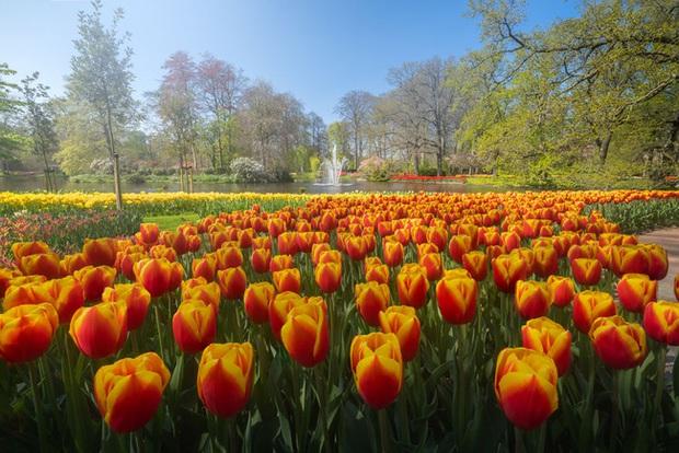 Vườn hoa đẹp nhất thế giới đóng cửa sau 71 năm, nhiếp ảnh gia tò mò muốn vào bên trong thì choáng ngợp với cảnh tượng trước mắt Photo-8-15882497654471287204001
