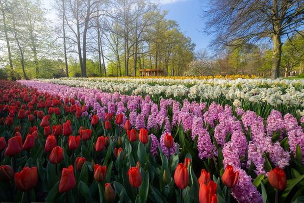 Vườn hoa đẹp nhất thế giới đóng cửa sau 71 năm, nhiếp ảnh gia tò mò muốn vào bên trong thì choáng ngợp với cảnh tượng trước mắt - Ảnh 9.