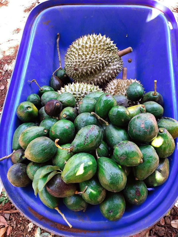 Lý Nhã Kỳ ở nhà làm nông mùa dịch: Giản dị đội nón lá, diện đồ ngủ đi hái trái cây trên nông trại 50 hecta ở Đà Lạt - Ảnh 4.