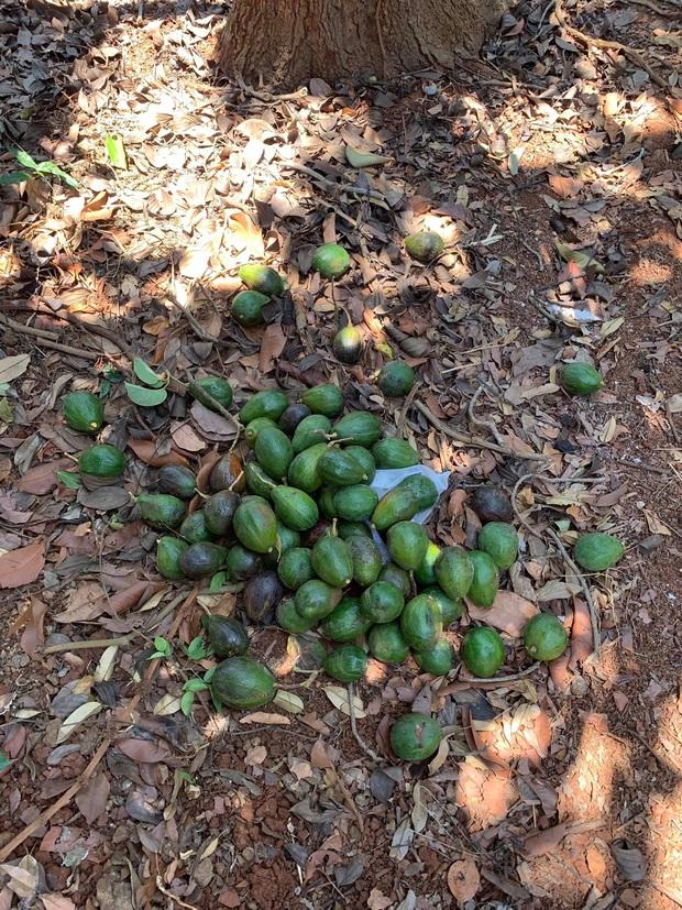 Lý Nhã Kỳ ở nhà làm nông mùa dịch: Giản dị đội nón lá, diện đồ ngủ đi hái trái cây trên nông trại 50 hecta ở Đà Lạt - Ảnh 5.